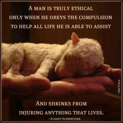 A man is truly ethical only when he obeys the compulsion to help all life he is able to assist... | #compassion #animals