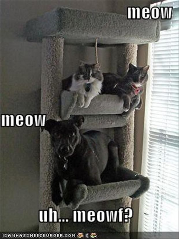 Funny Cats & Dogs 3 that's awesome!