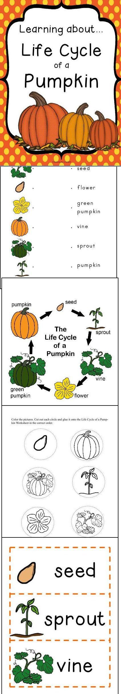 Life Cycle of a Pumpkin Unit! http://www.christianhomeschoolhub.spruz.com/pt/Fall-Related-Resources/wiki.htm