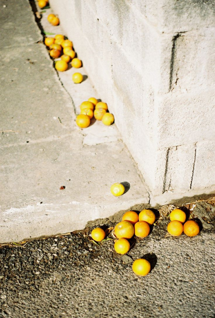 Spilled citrus in North Cyprus.