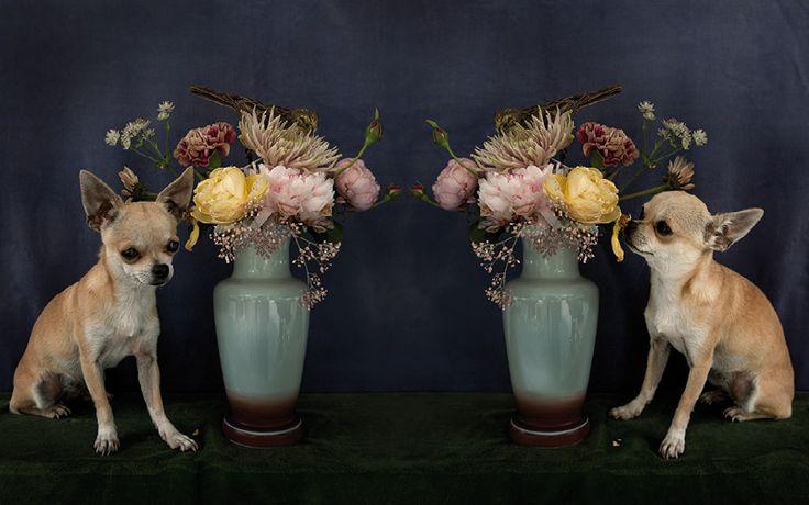 Album 1 « Gallery 18 « miep jukkema   photography