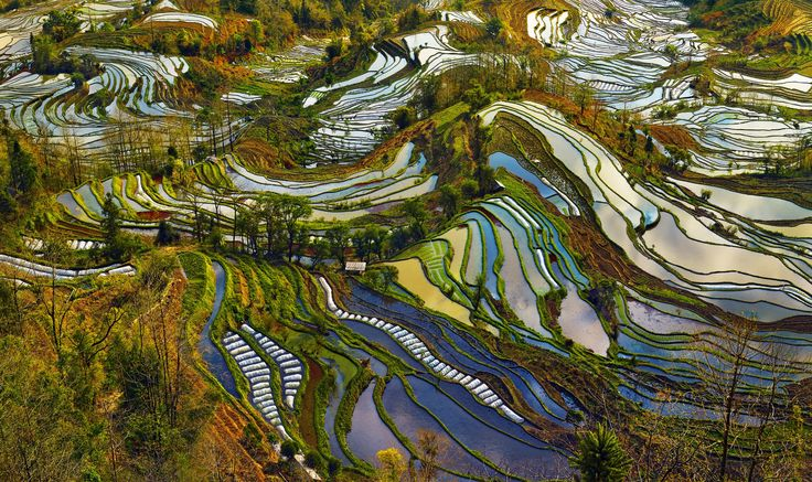 the rice field  terrace sculpted  by the Hani minority  with the Mosaic  of multi colors