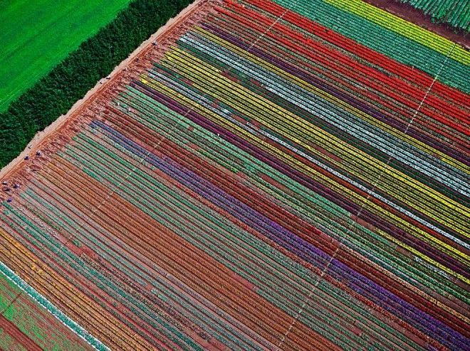 Table Cape Tulip Farm on Table Cape, North West Coast of Tasmania | 1,000,000 Places