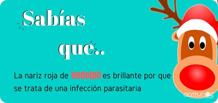 Sabías ¿por qué es? su nariz roja de #Rudolph , un grupo de científicos noruegos tiene la teoría de que se trata de una infección parasitaria de su sistema respiratorio.