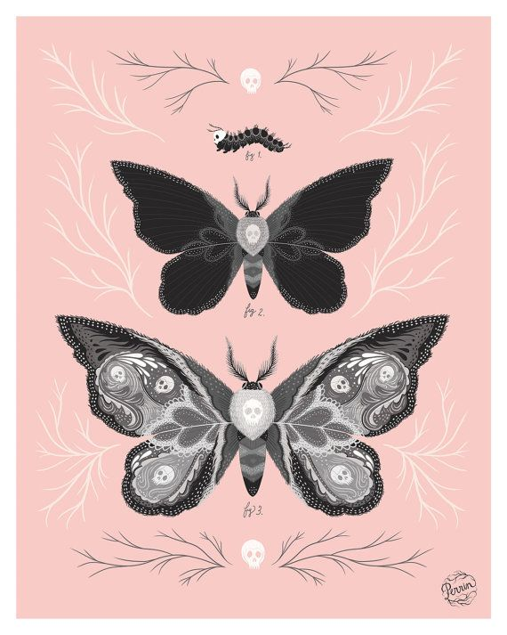 My take on a Victorian-style scientific, natural drawing. Digital illustration inspired by Death's Head Hawk Moth.