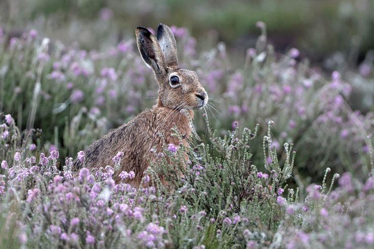 Rabbit, автор — Bernd Wesner на 500px.com
