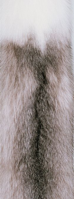 Fox - Saga Furs  Shadow Blue Frost