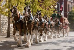 Events: World Renowned Clydesdales To Visit Bristol, Virginia | Kingsport Times-News