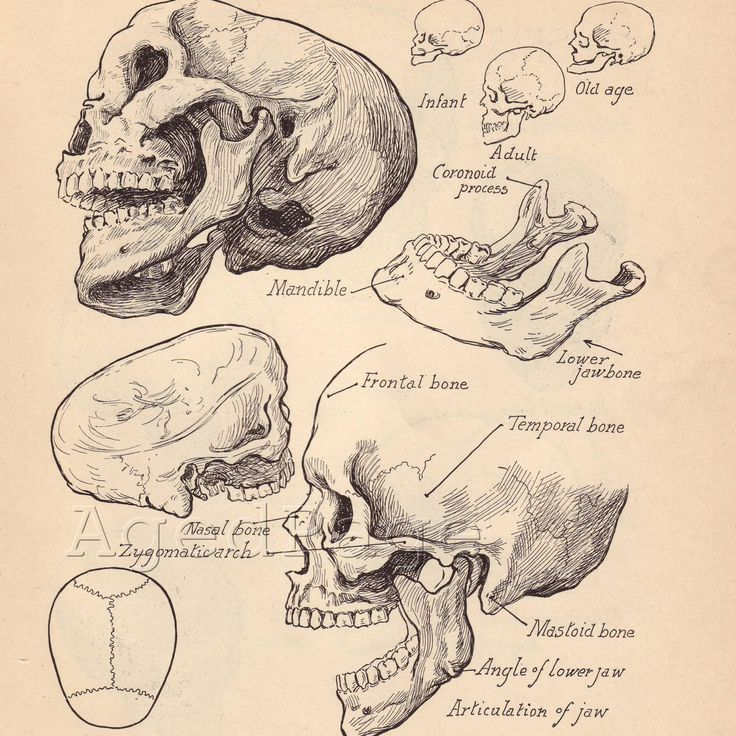 Vintage Anatomy Print, Antique Artistic Human Anatomy Chart, Book Illustrations, 1930s Prints to Frame, Skull Skeletal Chart, Double Sided