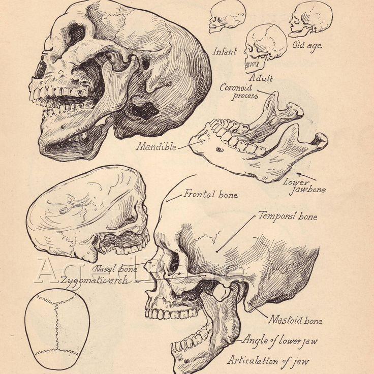 Alfa img - Showing > Vintage Anatomical Illustration