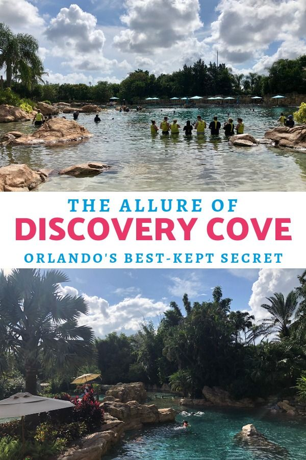 Discovery Cove Orlando S Best Kept Secret Wherever I May Roam Travel Blog Discovery Cove Discovery Cove Orlando Discovery Cove Florida