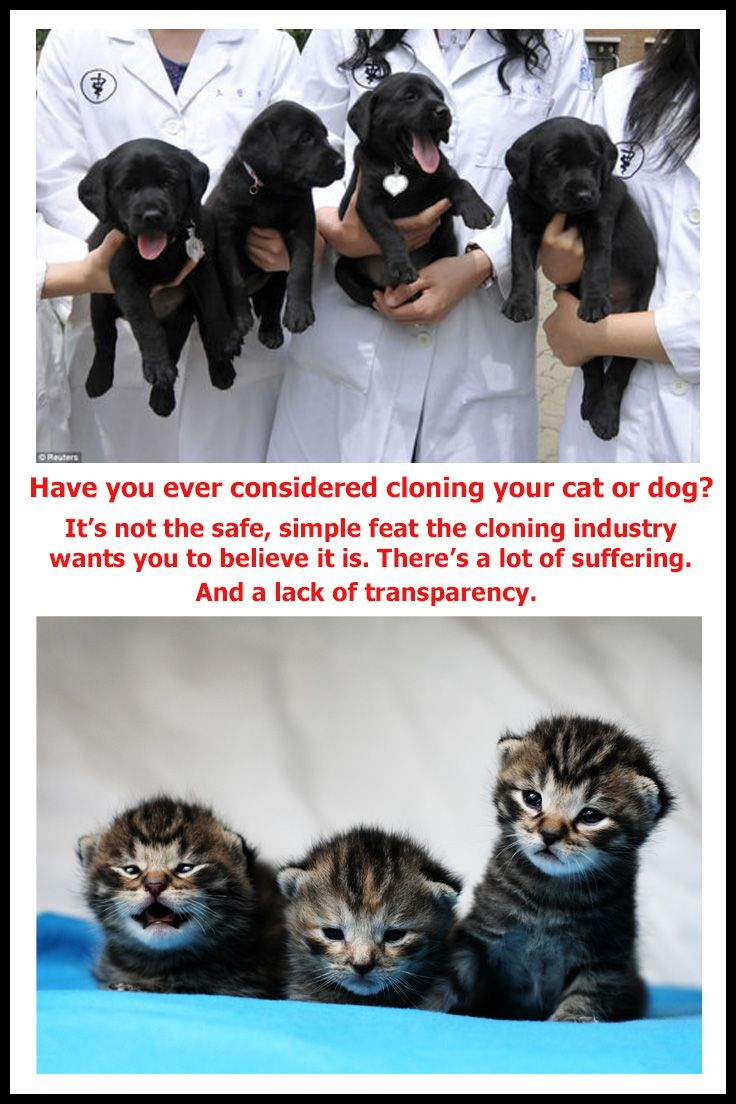 Pet Cloning And Why I D Never Do It Pets Cute Animals Kittens And Puppies