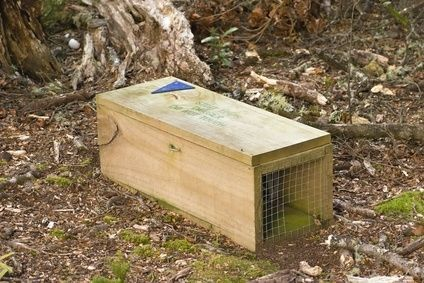By following these steps, you can build a strong, reusable rabbit trap using only a minimal amount of materials and time. This box trap requires bait to lure a rabbit into the box. If the rabbit knocks the door prop down, a door swings down and a nine gauge wire prevents the rabbit from exiting. Make sure you check local laws regarding trapping before you spend money and time building a trap.    Read more: How to Build a Simple Rabbit Trap | eHow.com http://www.ehow.com
