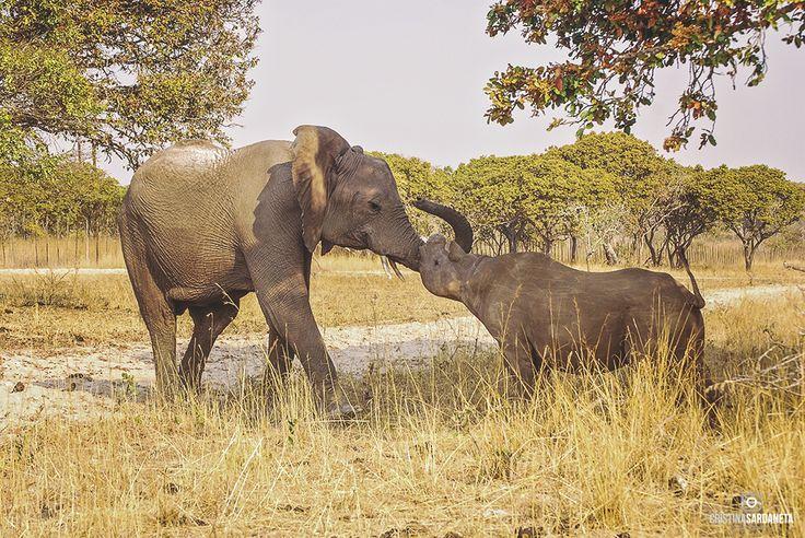 La amistada también existe entre especies diferentes.