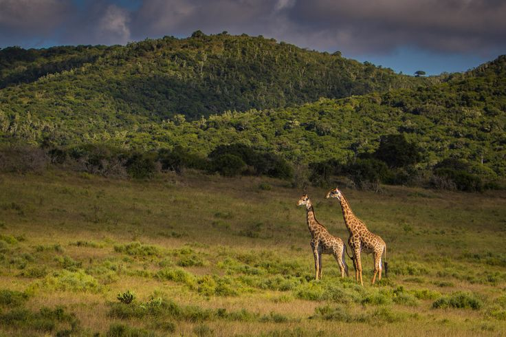 Taking in the view on the plains of South Africa wildlife