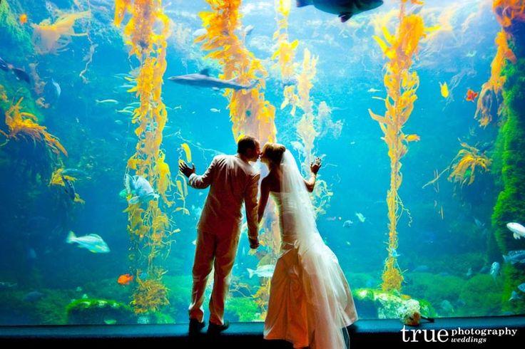omfg how cute: Ideas, San Diego, Amazing Aquarium, Wedding Plans, Wedding Photography, Dreams, Weddings, Aquarium Wedding, Birches Aquarium