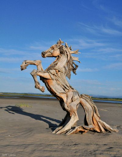 Drift Wood Horse by Jeffro