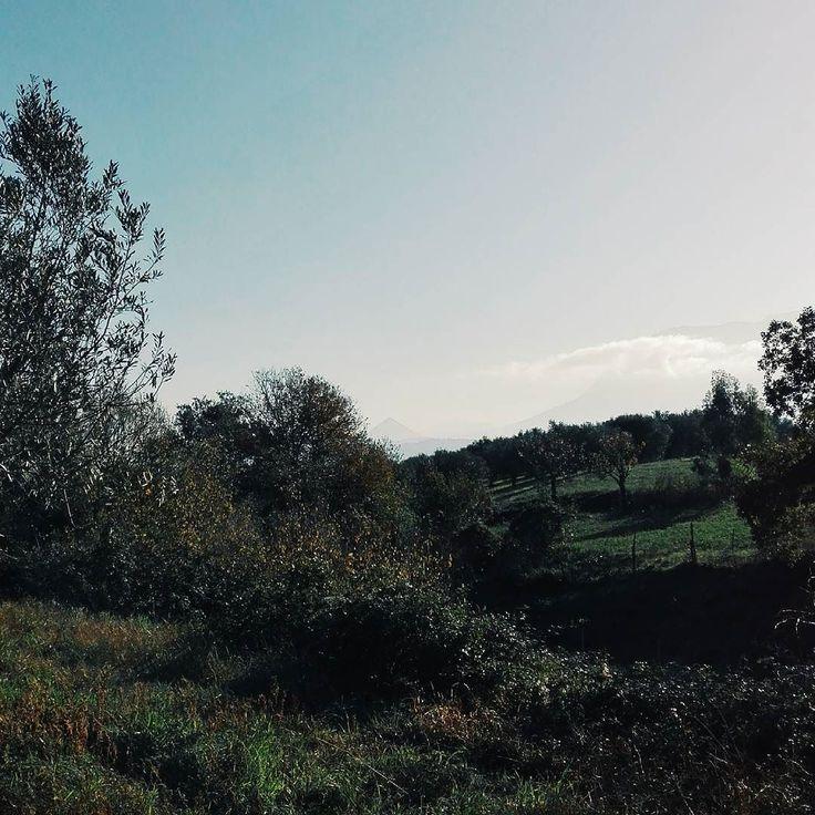 Oggi si sentiva l'aria di primavera. I primi caldi raggi di sole ci hanno salutato in questo sabato di marzo. I profumi della natura hanno inebriato il nostro olfatto. Le dolci melodie degli uccellini ci hanno tenuto compagnia per lunghi tratti della giornata. Un cielo splendente ha fatto da cornice a questo giorno da favola. La primavera è natura. Buonanotte.  Edit wirh @vscoG3  #buonanotte #goodnight #campania #salerno #nature #landscape #vscocam #vsco #vscoitaly #vscolandscape #beautiful…