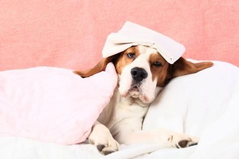 How Can I Know If My Pet is Sick?