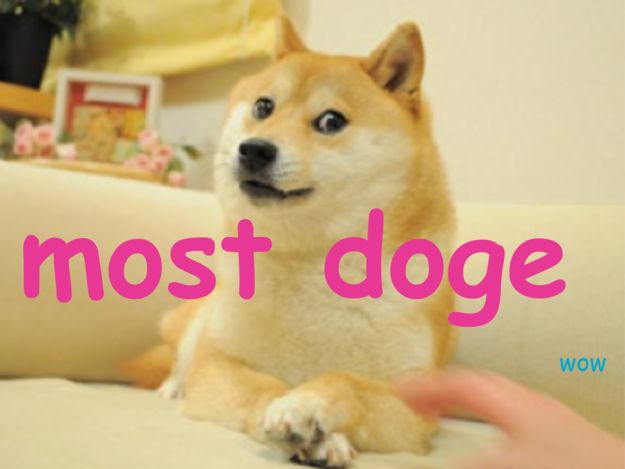 how to say doge correctly
