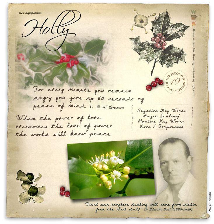 Pin by Nicola PartingtonOmar on Flower essences Bach