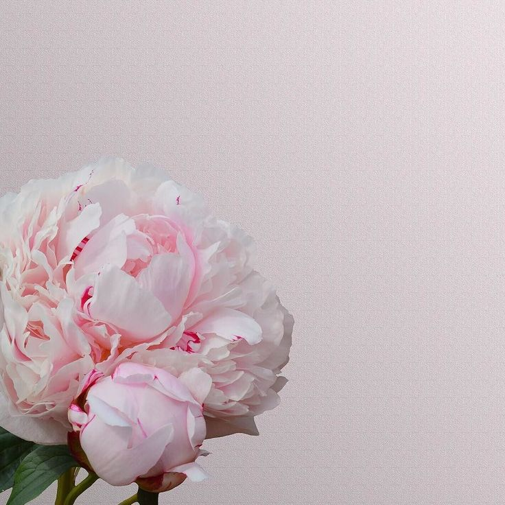 Peony perfection - happy first day of Spring! #trichovedicmood #trichovedic #hairwisdom #luxuryhaircare