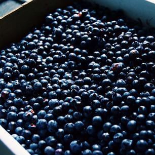 It's almost the season for fresh New Brunswick blueberries, a tasty delicacy worthy of Grandma's best pie recipe. // Au menu ce week-end : de succulents bleuets du Nouveau-Brunswick! #ExploreNB