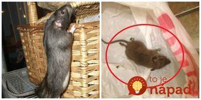 Hneď ako sa ochladilo, začali mi do domu liezť myši: Toto mi poradil švagor a myši sa pratali z pivnice aj z bytu ako namydlený blesk!