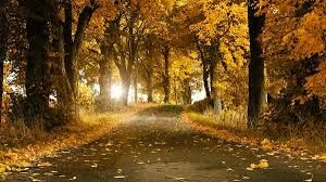 Image result for fall leaves images