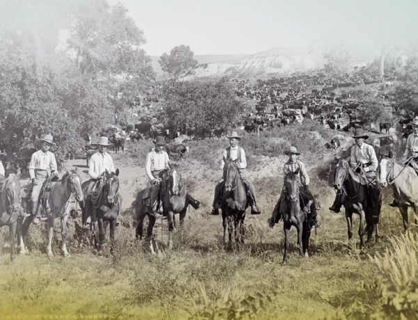 Chisholm trail texas cowboys with cattle true west