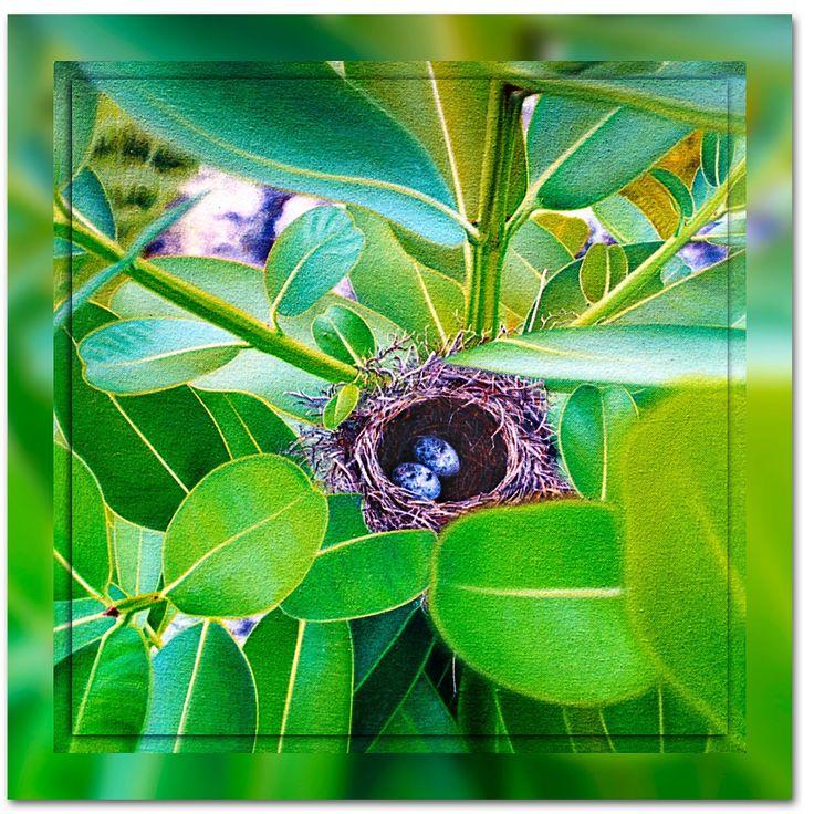 NAURU'S NEST - Flora and Fauna - Ian Anderson Fine Art http://ianandersonfineart.com/