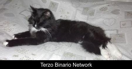 PARABIAGO (MI): SMARRITO CIUFFO, GATTO NERO A PELO LUNGO http://www.terzobinarionetwork.com/2016/12/parabiago-mi-smarrito-ciuffo-gatto-nero.html