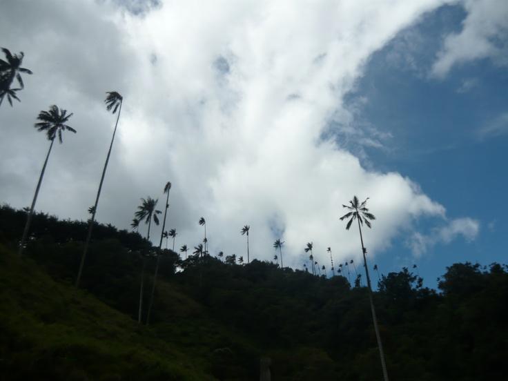 Valle del Cocora. Salento, Quindío