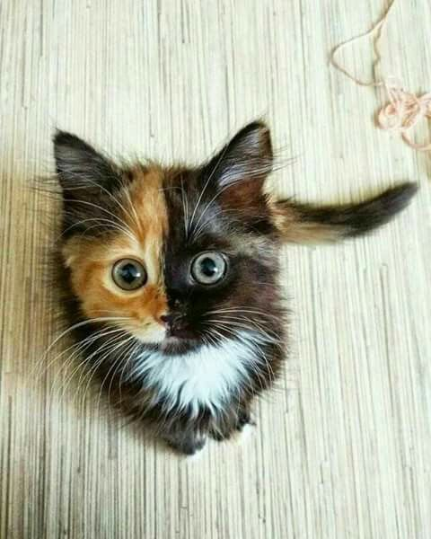 it's so cute