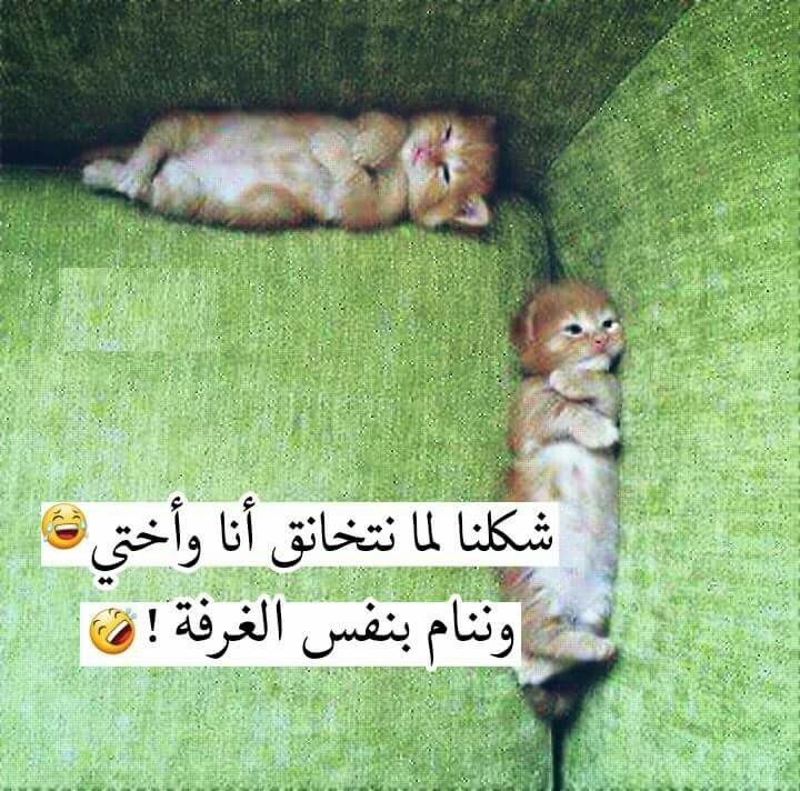 Pin By Elif On Qoutes Beautiful Arabic Words Funny Pictures Funny