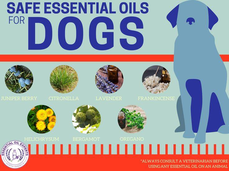 25 Best Ticks On Dogs Ideas On Pinterest Natural Flea