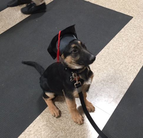 Here's a dog that just graduated from puppy school! - Album on Imgur