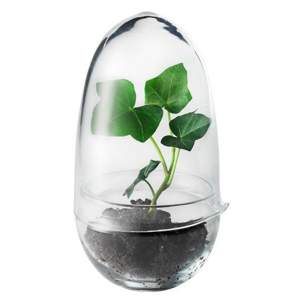 Grow minikasvihuone, kirkas