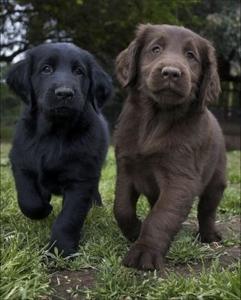 25 Reasons Why One Dog Is NOT Enough; black dog and a brown dog