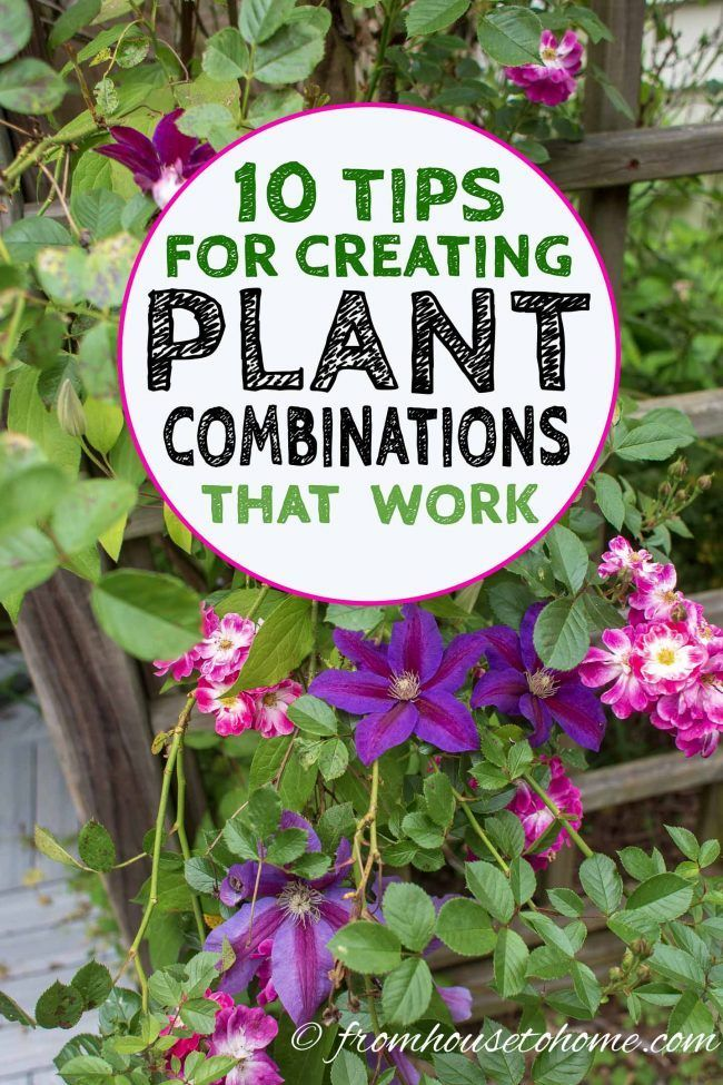 Plant Combinations 10 Tips For Creating Flower Combinations That Work Gardening From House To Home Plant Combinations Plants Landscaping Tips