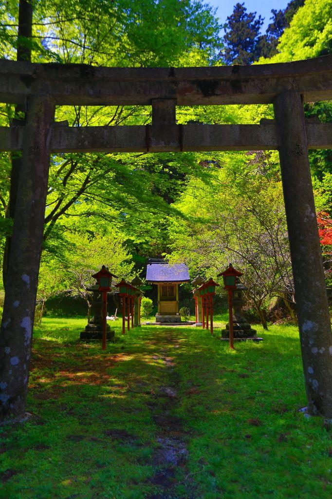 Torii gate, Japan 鳥居