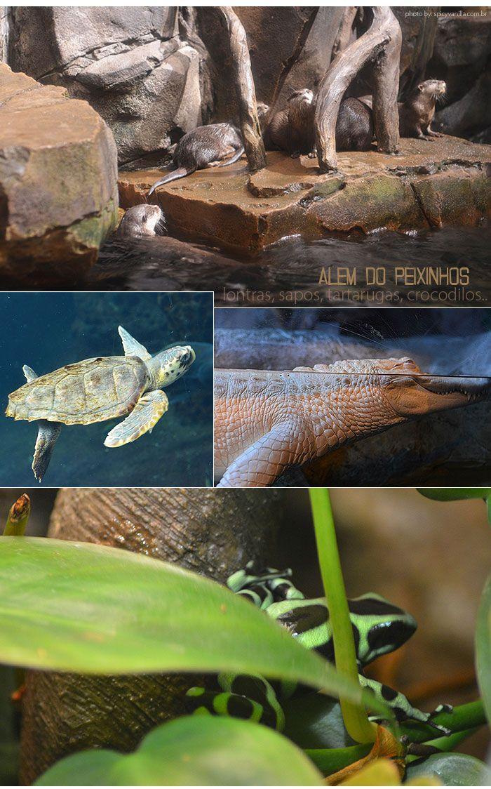 Atlanta Atlanta Georgia Aquarium And Atlanta
