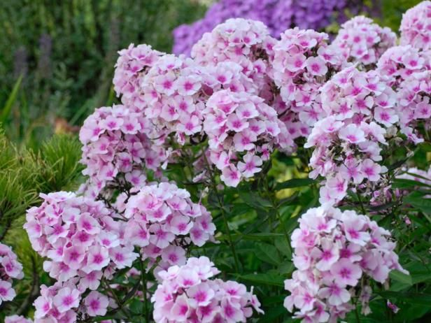 37 best images about garden full sun perennials on for Low maintenance perennials zone 4