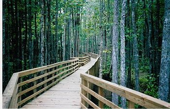 I'd love to walk along this! William B Clark Sr's Nature Conservancy Natural Preserve, Wolf River, Rossville, TN