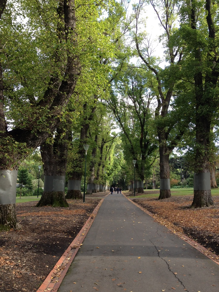 A beautiful Melbourne morning in the Fitzroy Gardens <3