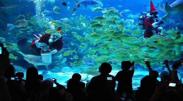 Top Malaysia Sightseeing Attractions - Aquaria KLCC, is said to be the biggest aquarium in the world.