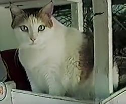Creme Puff (August 3, 1967 – August 6, 2005) was an American cat who died aged 38 years and 3 days (or 168 cat years). She was the oldest cat ever recorded, according to the 2010 edition of Guinness World Records.[1][2][3]  Creme Puff lived with her owner, Jake Perry, in Austin, Texas.[1] Perry had another cat, Granpa, who was claimed to have been born in Paris in 1964 and died 1998, aged 34 years and 2 months. Granpa was posthumously awarded 1999 Cat of the Year by Cats & Kittens…