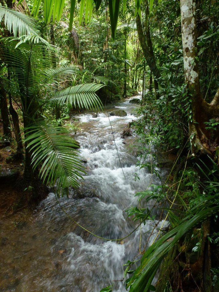 Daintree rainforest, Queensland Australia
