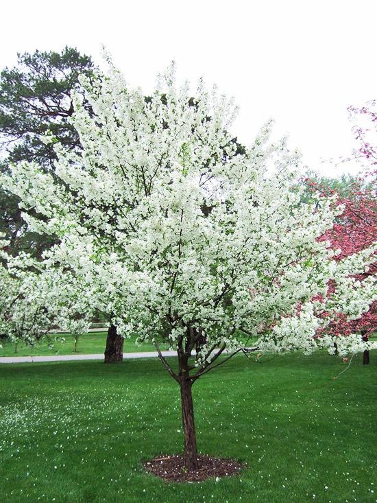 spring green three trees - photo #35
