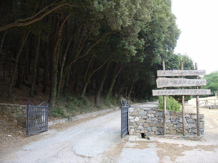 La bellissima foresta di Parco Marganai (Iglesias)